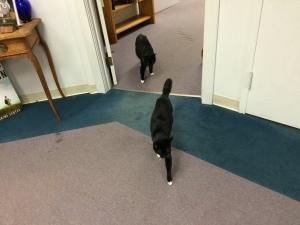 Cedric and Rowena Shop Cats.
