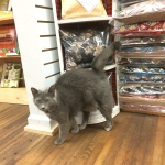 Shop Cat Junie