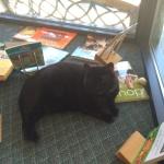 Shop Cat Bea